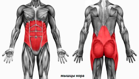 Упражнение планка - это ваш идеальный пресс. Мышцы кора.