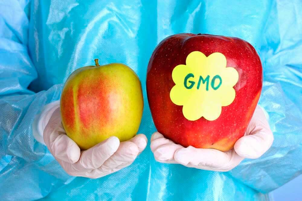 5 мифов о продуктах, содержащих ГМО, вредны ли они для человека